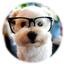 Adorable cute dog photography pup puppy spectacles